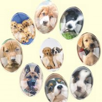 Glass Mix Size Oval Cute Mixed Dogs Pets Flatback Cameo Cabochon