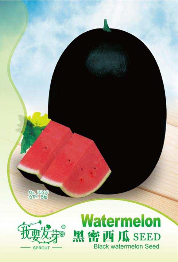 Giant Black Skin Red Inside Ellipse Watermelon Seeds