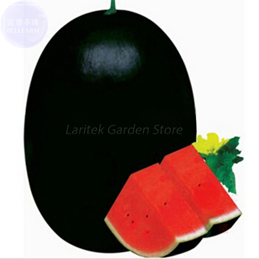 BELLFRAM Giant Sweet Black Watermelon Seeds, 20 Seeds, Professional Pack, huge delicious earliest cold tolerant watermelon E4154