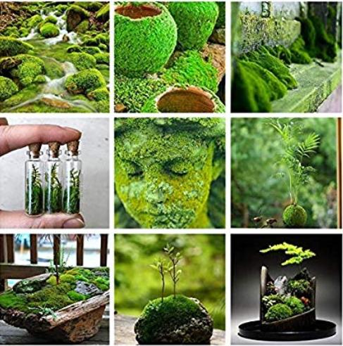 500 Pcs Aquatic Grass Bonsais Colorful Underwater Moss Aquarium Pot Plant Indoor Fish Tank Landscape Ornamental Garden Decor - (Color: Mixed)