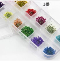 50pcs   24pcs  Pressed flowers