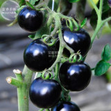 BELLFARM the Most Black Tomato in the world Fruit Seeds