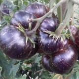 Black Striped Tomato Organic Seeds