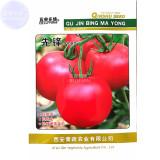 Pinkish Red Tomato Big Apple-sized Fruit Seeds
