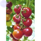 Dark Red Tomato Seeds