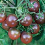 Tomato Cherry Black Vegetable Seeds