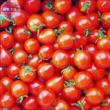 'Piccolo Cherry' Tomato Seeds