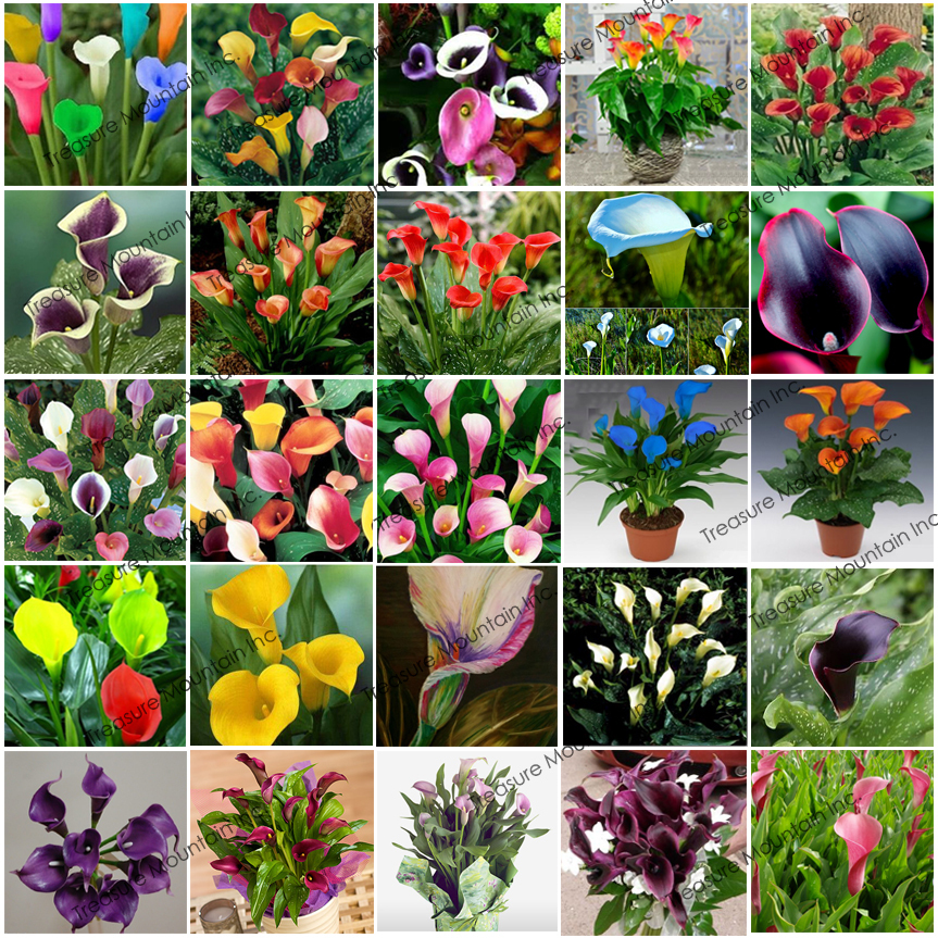 All Types Of Lilies: Seeds
