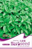 Heirloom Rare Sweet Basil Organic Seeds, 30 Seeds / Pack, Excellent New Ocimum Basilicum Herbs D008