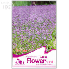 Verbena Blue Vervain Perennial Flower Seeds, 50 seeds, easy to plant swamp verbena flowering plant A137