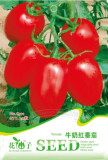 1 Original pack, 20 seeds / pack, Milky Red Cherry Tomato, Edible Organic Fruits #C101