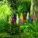 Heirloom Wild Lupine Flowers Mixed Pink White Yellow Red Purple Dark Red colors, 20 Seeds, very easy to grow E3703
