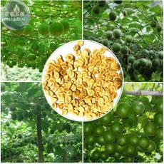 BELLFARM Siraitia grosvenorii Luo Han Guo Seeds, 10 Seeds, herbal monk fruit new fresh seeds BD068H