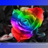 the Rarest 'Rain Rainbow' Colorful Rose Seedling Flower Seeds, Professional Pack, 50 Seeds / Pack, Light Fragrant Garden Flower