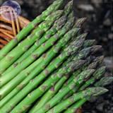 BELLFARM Organic Green Asparagus Vegetables Seeds, Professional Pack, 20 Seeds / Pack, Tasty Green Vegetables E3285