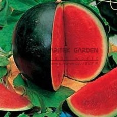 Big Black Skin Red Seedless Watermelon Organic Seeds, Professional Pack, 20 Seeds, 13% Sugar Sweet Juicy Edible Melon E3011