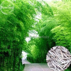 Heirloom Anhui Dabie Mountain Moso Bamboo, 30 seeds, fast growing high use value E3646