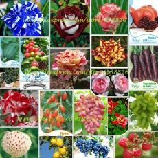 Hot Sales!!! Big Discount!!! 20 Kinds of Seeds, including Rose, Fruits, Goji, Coffee, Pineberry, Grape, Water Melon, Vegetables