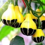 Rare 'Naughty Boy' Black Yellow Pumpkin, 8 seeds, ornamental garden toys E3805