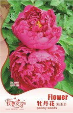 10 Original Packs, 8 seeds / pack, Feral Luoyang Red Peony Plants with Big Red Flowers, Fragrant Paeonia Suffruticosa