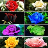 Rare 8 Types of Colorful Valentine's Romantic Rose Flower, 50 Seeds, garden flowers E3788