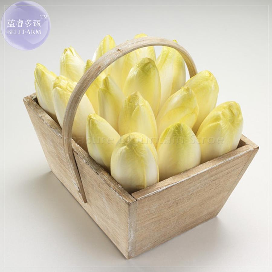 BELLFARM Belgium Endive Chicory Seeds, 20 Seeds, Professional Pack, organic witloof gourmet salad vegetables BD074H