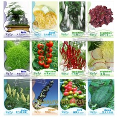 12 Original Packs Seeds, Asparagus Fern GOLDEN STRING PUMPKIN Long White Eggplants Tomato Goji Berry Coffee Watermelon Pepper