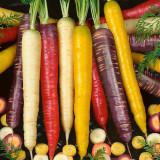 1 Professional Pack, 2000 seeds / pack, Mix Carrot Seeds, Six Varieties Fresh Heirloom Organic Vegetable Seeds #NF233