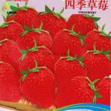 Heirloom 'Jindi' Season Big Red Strawberry Seeds, 40 Seeds, Original Pack, sweet organic juicy Bonsai Outdoor Indoor OJD202Y