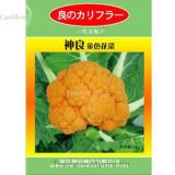 Rare Japanese Golden Cauliflower Vegetables, 3 grams seeds, healthy edible NOT-gmo broccoli SL001Y