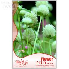White Flower Gomphrena Globosa Seeds Bonsai, 30 seeds, long flowering ornamental plants IWSA251