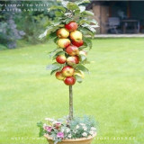 5 packs, 10 seeds / pack * Red Apple Tree BONSAI serious * VERY FRAGRANT, SWEET, CRISP * Gardening Seeds * Plus Mysterious gift