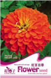 1 Original Pack, 50 seeds / pack, Red Zinnia Elegans Common Zinnia Youth-and-Old-Age #A014