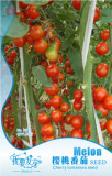 Very Sweet Red Cherry Tomato 'Hong Gu Niang' Organic Seeds, Original Pack, 10 Seeds / Pack, Tasty Juicy Fruit E3051