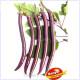Hangzhou Purple Red Eggplant Seeds, 100 Seeds, Simple pack, Early mature Hybrid F1 TS202T