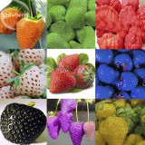 Mixed 9 Types of Rare Delicious Strawberry Seeds, 100 seeds, Vegetables Fruit Plant Seed  E3790