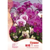 BELLFARM Phalaenopsis Purple Pink Butterfly Orchid Bonsai, 10pcs Seeds Original Pack, light fragrant home garden flowers