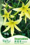1 Original Pack, 10 Seeds / Pack, Hemerocallis Citrina Baroni Seeds, Heirloom Tasty Day Lily Herb Vegetables #NF535