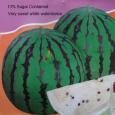 Rare Very Sweet Green Skin White Watermelon Organic Seeds, Professional Pack, 20 Seeds / Pack, Edible Juicy Melon Fruit E3016