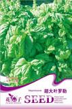 Organic Giant Grandi Foglie Valentino Basil Seeds, Original Pack, 30 Seeds / Pack, Italian Heirloom NON-GMO Vegetable Herbs D046