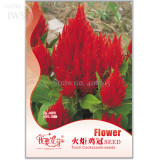 Big Red Beautiful Cockscomb Seeds, 40 seeds, balcony potted bonsai plant flower seeds for home garden IWSA270