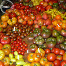 Mixed 27 Types of Different Tomato Family, 100 seeds, mini small middle large giant organic heirloom tomato Fruits E3826