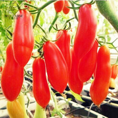 BELLFARM Red Banana Tomatoes Seeds, 100 Seeds, Super Sweet Vegetables Interesting Semi-Urban Garden