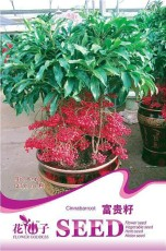 1 Original Pack, 10 seeds / pack, Coral Berry Seed Ardisia Crenata Sub Tropical or Indoor No Drought or Frost #A148