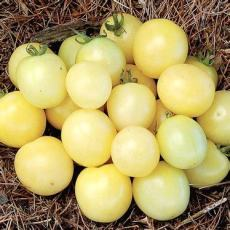 BELLFARM Hot Sale White Tomato Seeds for Home Garden Bonsai Fruits