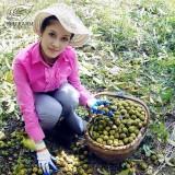 BELLFARM Heirloom American Pecan Seeds 'Nut Walnut' Bonsai Perennial Plants Longevity Fruits