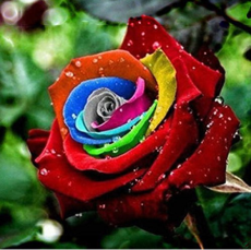 Rainbow Rose Seeds Rare Colorful Flower Potted Plant Garden Bonsai