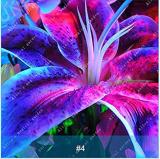1 Pcs Colourful Lily Bulb Bonsai Rare Perennial Fragrant Plants Flower Bulbs Not Seeds Rainbow Flower