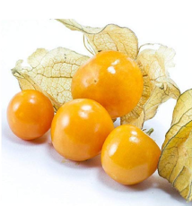 100pcs Physalis Peruviana Delicious Fruit Golden Berry Seeds