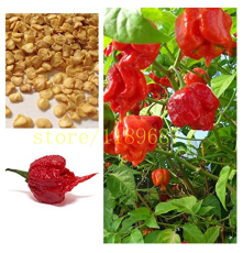 200 pcs ghost pepper chili seeds vegetable Fresh Rare Red Carolina Reaper Pepper Seeds (hot chilli )